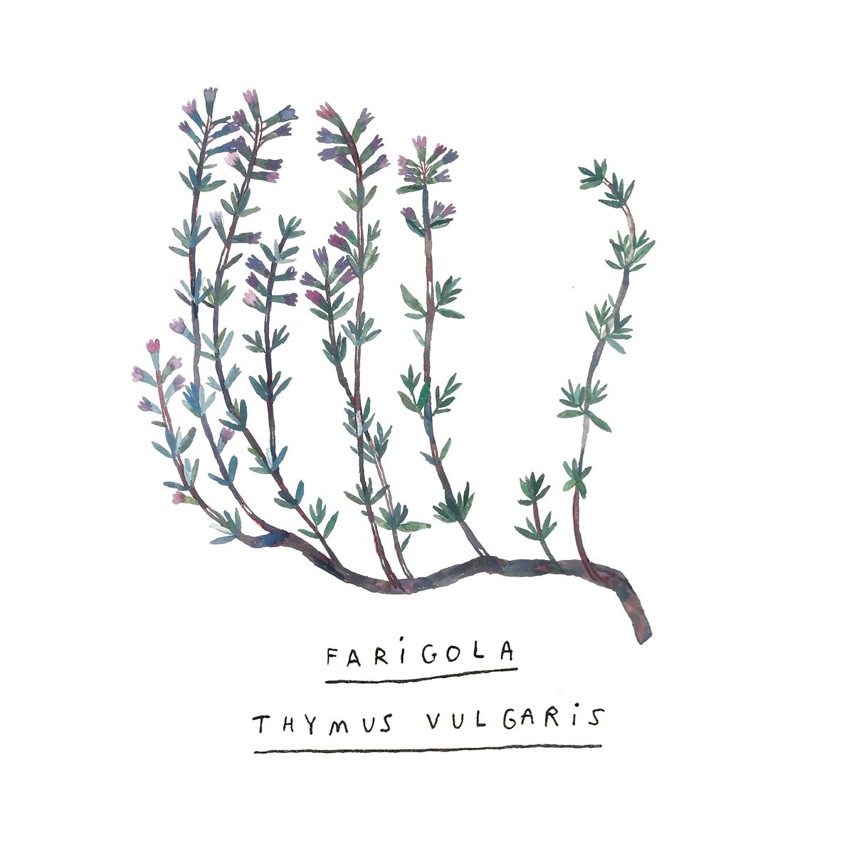 farigola