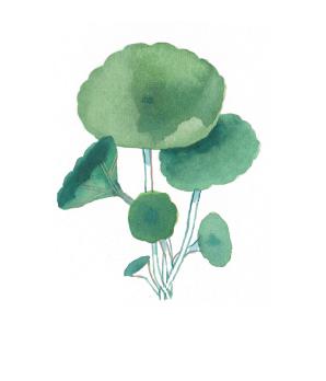 postales_105x150_botanicas-01