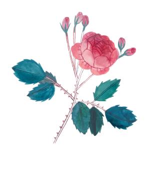 postales_105x150_botanicas-02