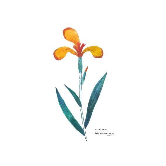 flors-20